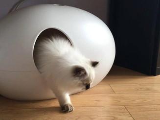 Moderne kattenbak PooPooPeeDo.jpg