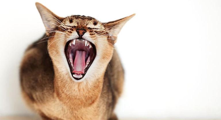 Kattengedrag 2.JPG