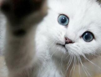 Introductie katten.JPG
