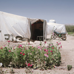Planting flowers in a refugee camp