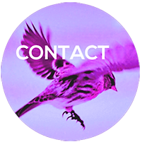Contact | Société internationale de mythanalyse (SIM)