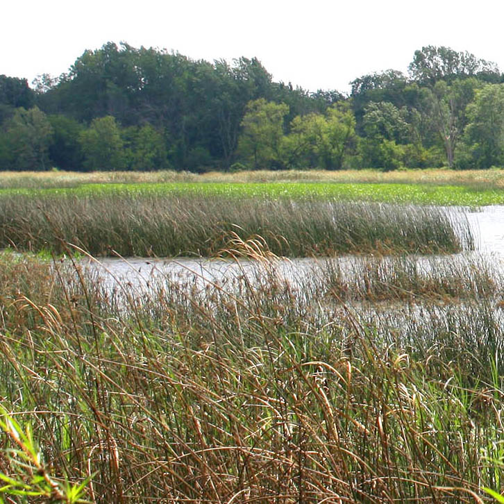 Why Restore Wetlands?