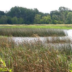 Why Restore Wetlands?