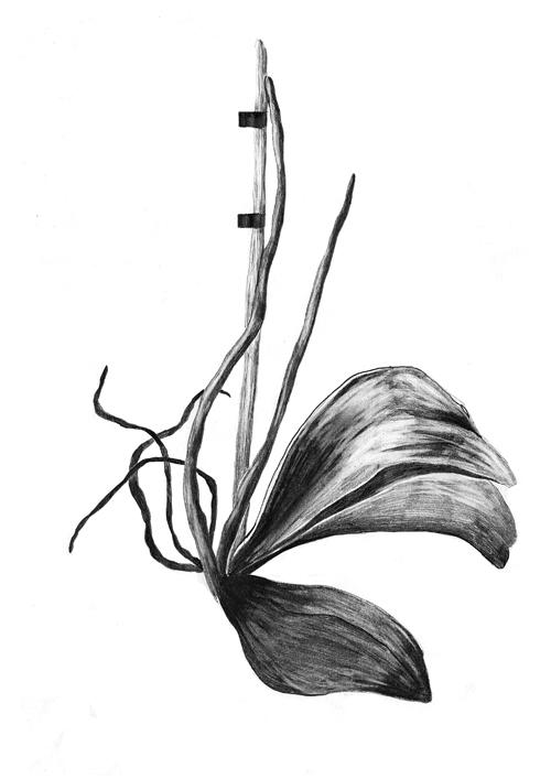 fleur1-copie