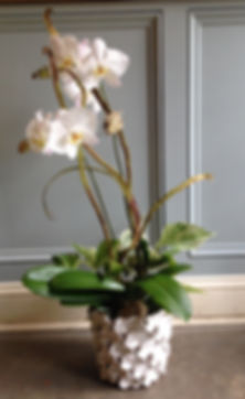 DS ORCHID.JPG