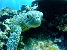 turtle-684348_1920.jpg