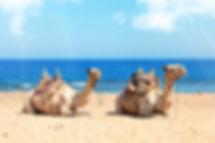 ausfluege_kamel-reiten.jpg