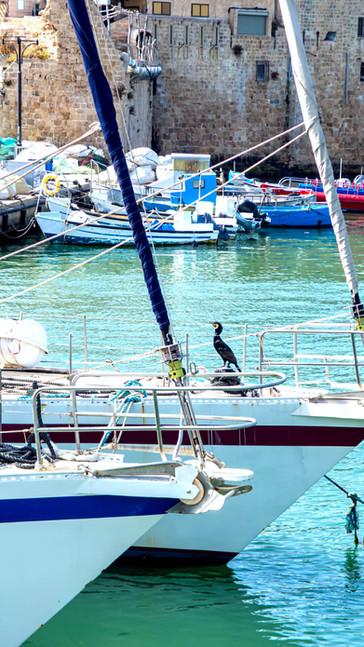 Acre marine.jpg