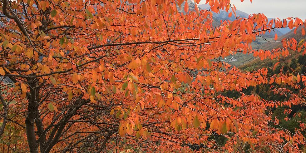 Autumn Retreat 2019: Inviting Gratitude and Appreciation
