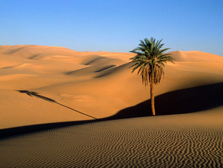 20 Animals to Encounter in the Desert