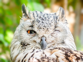 Canva - Close-up Photo of Owl with One E