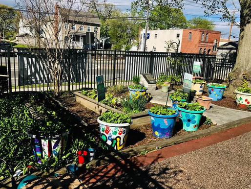12 Painted Pots planted by Port Children
