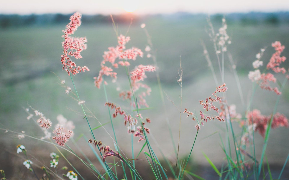 rosa graeser.jpg