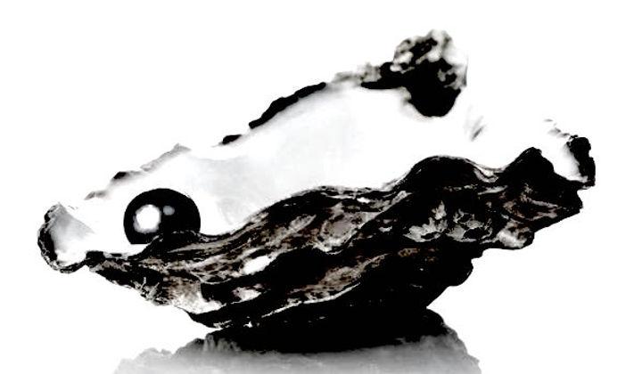 Black and white Black pearl .jpg
