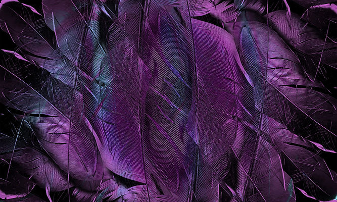 feather-4431599_1920.jpg
