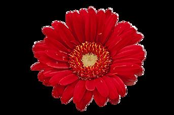 FSC-fiore-pianeta.png