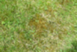 Moss Gardener Northampton Lawn Care.jpg