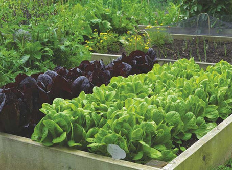 Vegetables to grow outdoors in winter