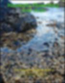 Screen Shot 2020-06-01 at 8.12.34 AM.png