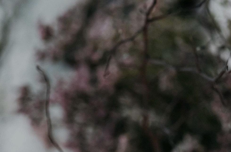 Studio-Noir-Monkey47-21_edited.jpg