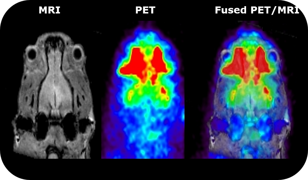 Rat head imaging