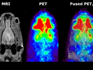 [PET/MR] Rat head imaging
