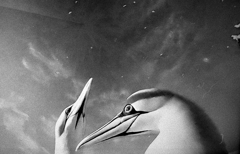 birds003_resolve.png