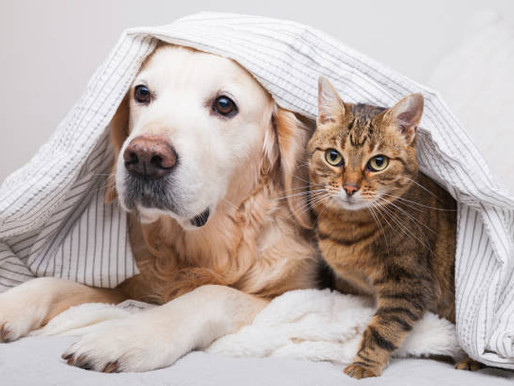 Proposed changes to animal management laws