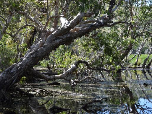 Horseshoe Bay Lagoon May '21