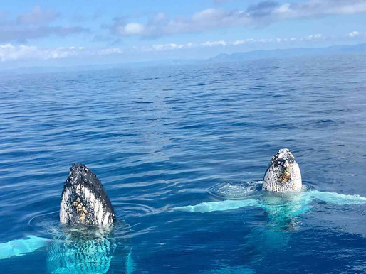 Give whales a wide berth during migration season - DES