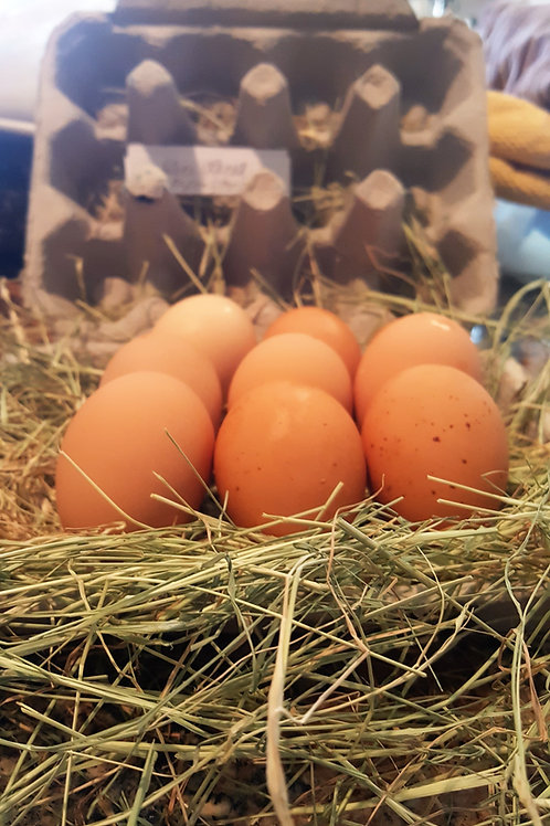 Fertilized English Bred Silver Laced Orpington Eggs