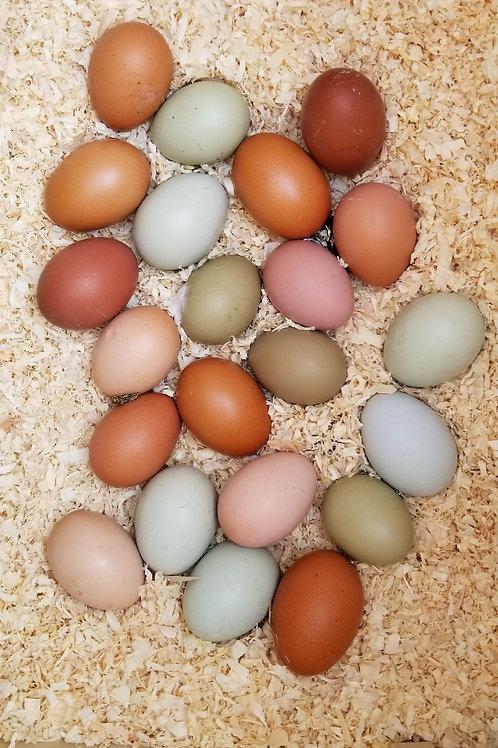6 pk Breeder Choice Fertilized Eggs Price 60 $  On Sale Description Breeders ch
