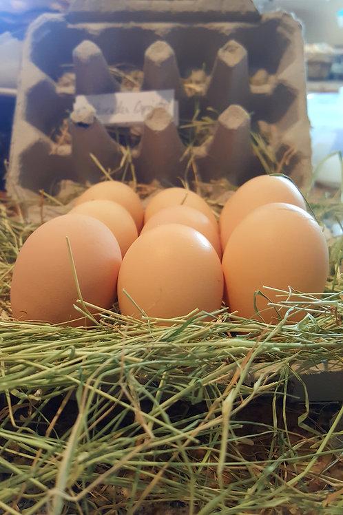 Fertilized Lavender Orpington Eggs