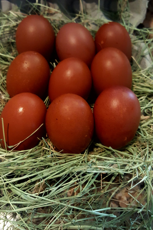 French Copper Maran Eggs