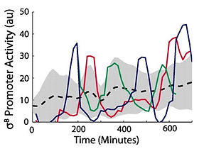 stochastic pulse regulation.jpg