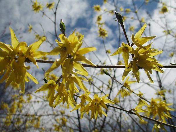 2020-05-08 MG 3 May 2020 Flowers 012.JPG