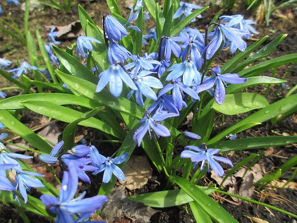 2020-05-08 MG 2 May 2020 Flowers 008.JPG