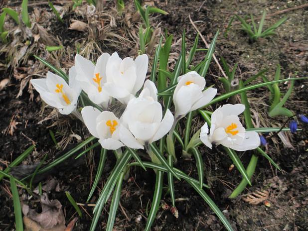 2020-05-08 MG 1 May 2020 Flowers 001.JPG