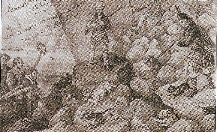 cairnterrier-anglais-1800.jpg