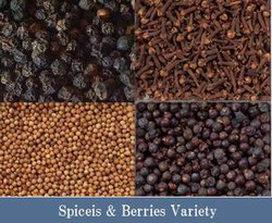 L'HERBE Essential Oil Seed