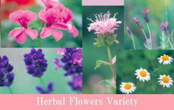 L'HERBE Essential Oil Flower