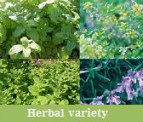 L'HERBE Essential Oil Leves