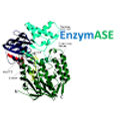 Logo_Enzymase_edited.jpg