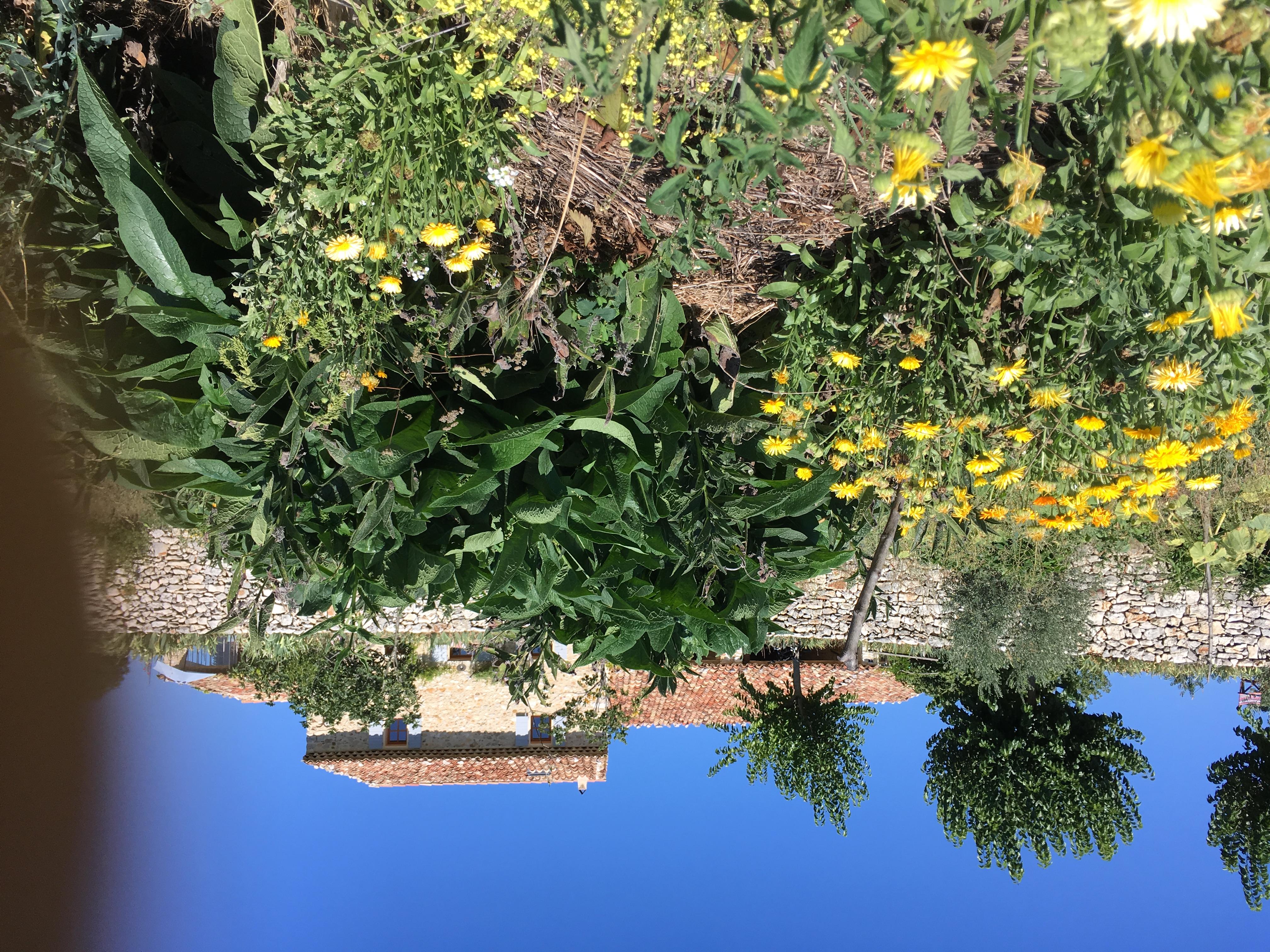 jardin en permaculture