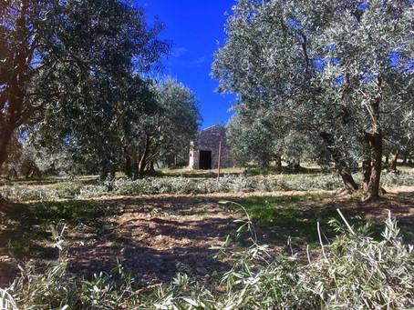 l'olive enchantée récompensée