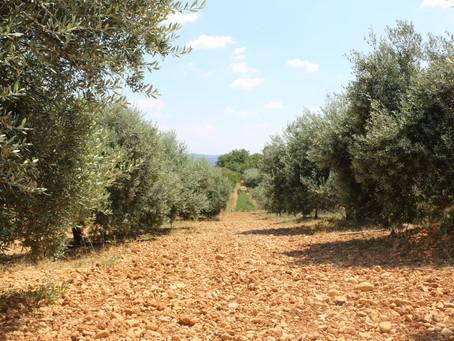 Découvrez l'appellation AOP Haute Provence