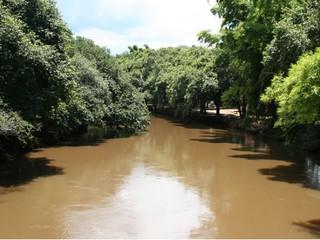 Dados do BIOTA embasam norma para restauração ambiental em São Paulo