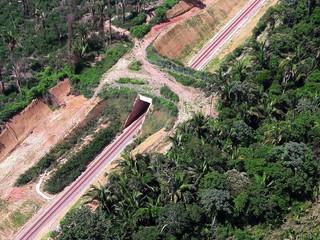Empreendimento licenciado pelo Ibama instala primeiro viaduto para travessia de fauna do país.