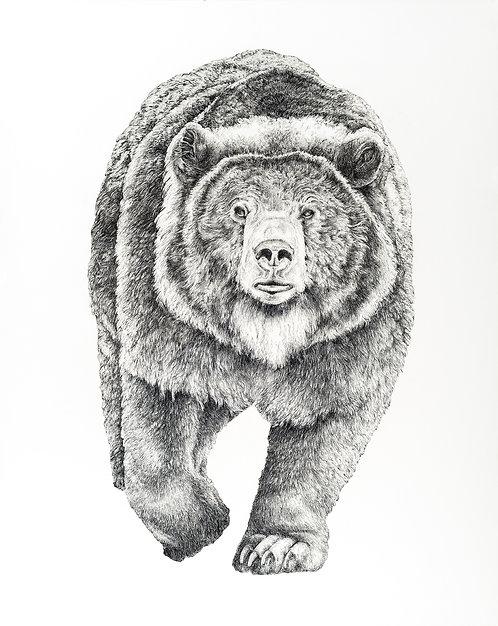 "Grizzly Bear - 40""x 32"""