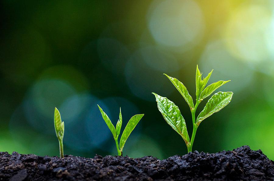 bigstock-Development-Of-Seedling-Growth-